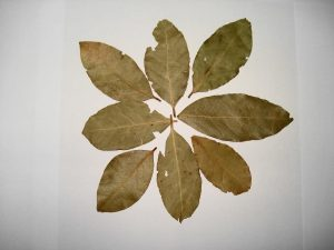 Bay Leaves – Origins, Uses, And Tips